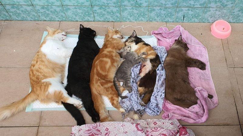 CatsIndonesia